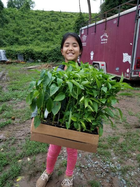 a child holds a tray of pepper plants