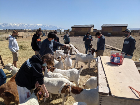 Group volunteers at the Utah Refugee Goat Project pet the goats.