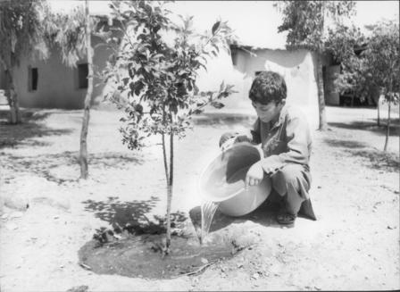 A young Afghan boy pours water onto the roots of a growing tree.