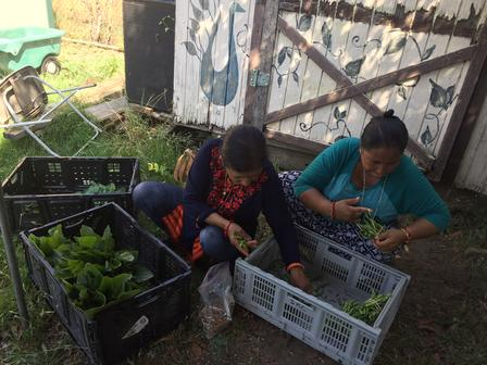 Growers with New Roots sort and bundle their produce to prepare it for sale