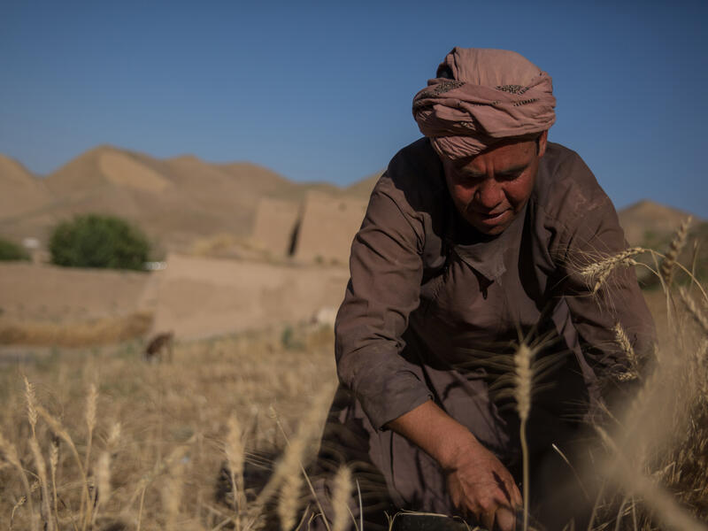 An man crouches down while working in a parched grain field in Afghanistan