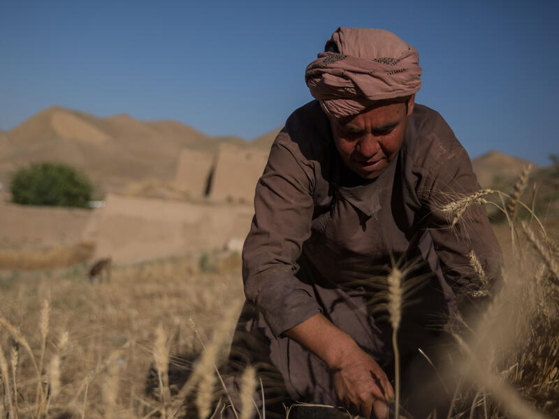 With desert mountains in the distance, a man bends over the tend to crops in his farm.