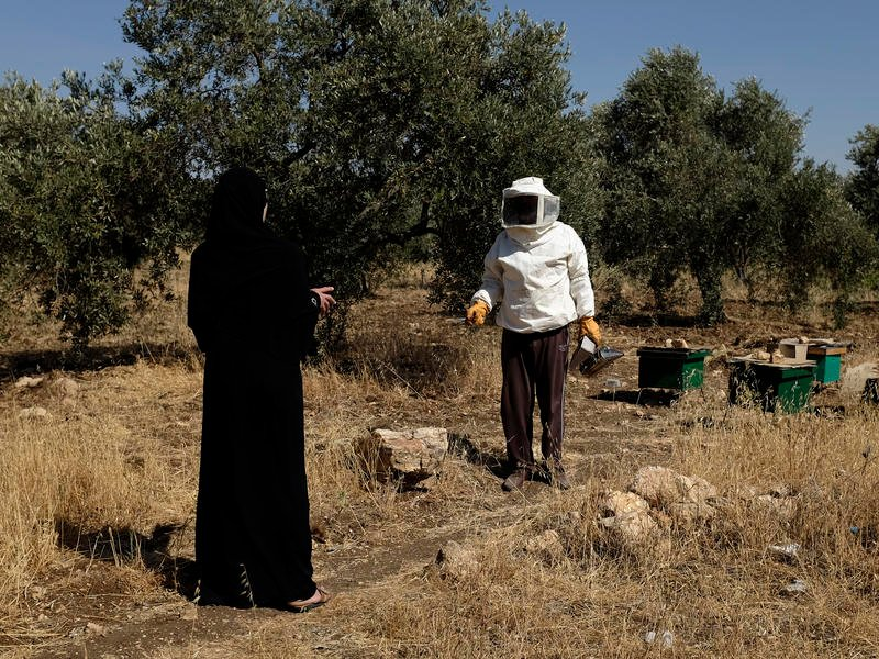 Syrian woman and her husband tending to beehives in Jordan