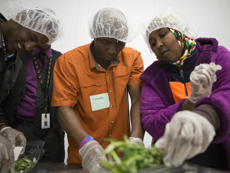 Refugees practice packing herbs in a warehouse