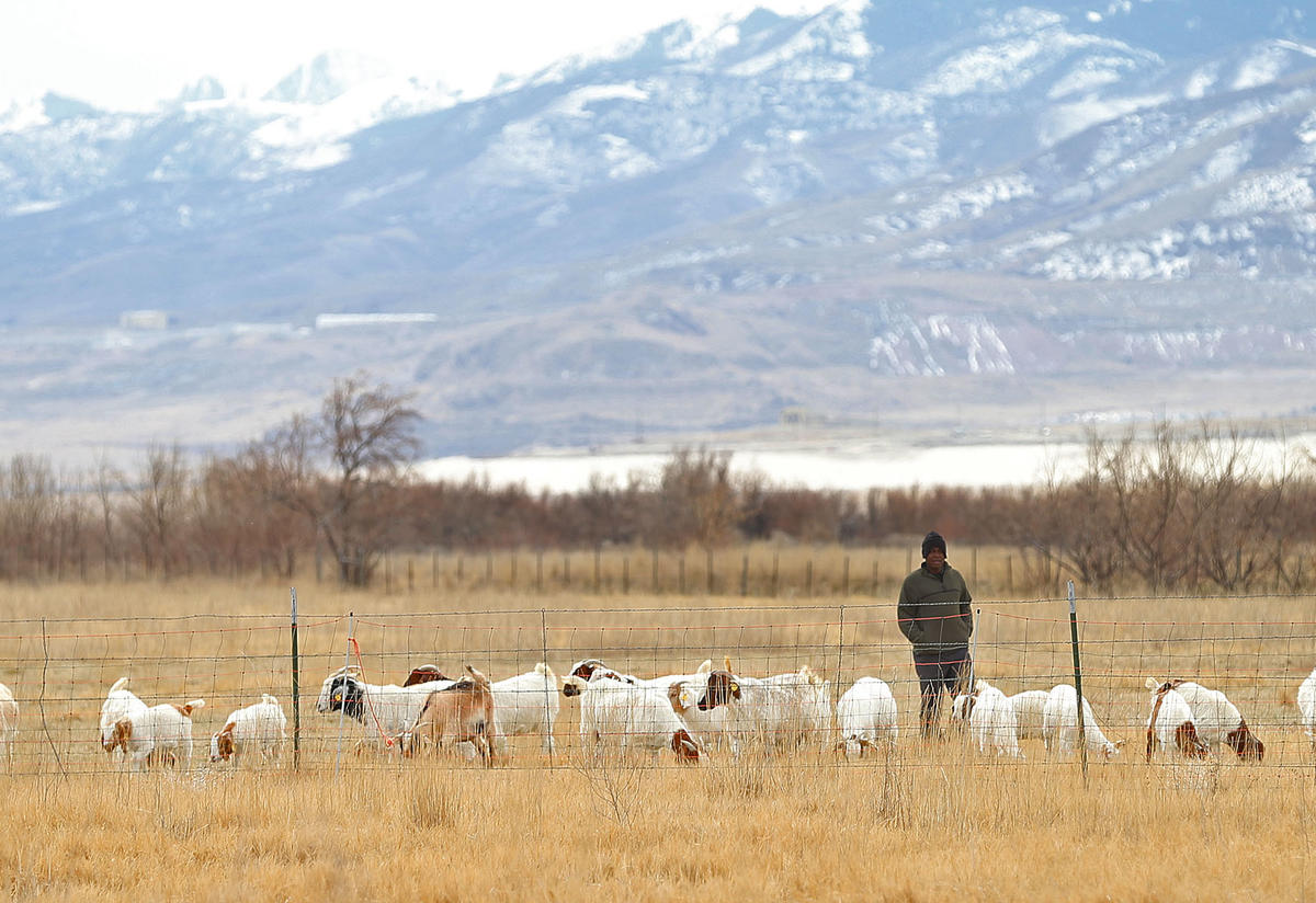 Goat Project Coordinator with goat herd