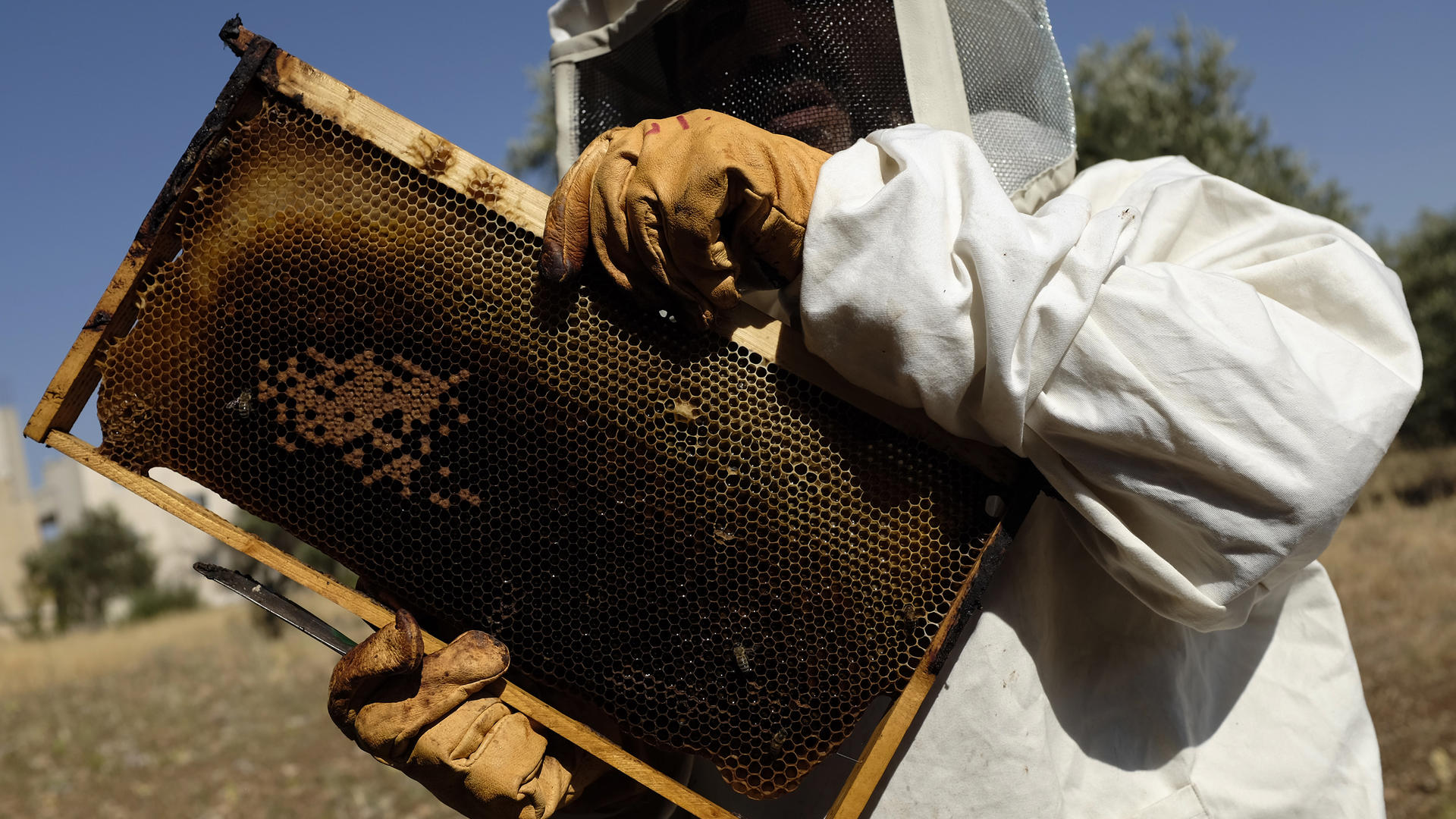 Syrian beekeeping family in Jordan